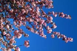 Les changements climatiques responsables de printemps plus précoces !