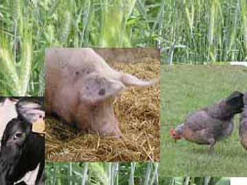 Filière végétale, filière animale : un partenariat gagnant-gagnant