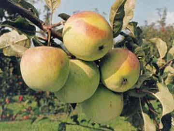 Gestion et valorisation de la biodiversité fruitière Franco-Wallonne