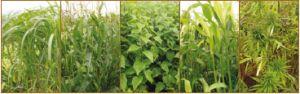 Autonomie énergétique et filière de production de bio-éthanol de deuxième génération