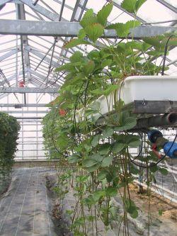Exposition de matériel et de fournitures nécessaire à la culture de la  fraise et des petits fruits ligneux