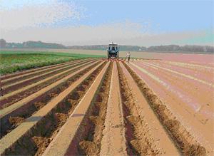 Une nouvelle technique pour limiter le ruissellement en pommes de terre