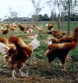 L'authentification des productions agricoles au CRA-W