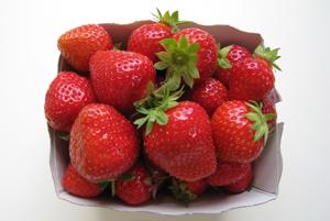 Une saison des fraises se termine ... une autre se prépare