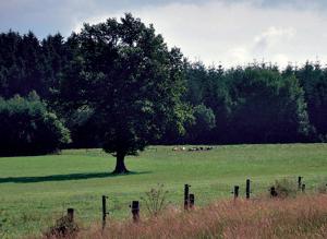 Flexibilité et résilience des exploitations d'élevages