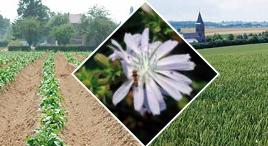 Insecticides bio et insectes utiles : Je t'aime, moi non plus