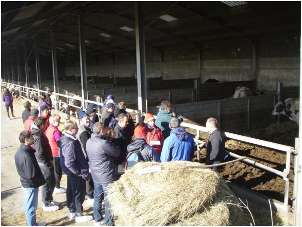Des éleveurs irlandais découvrent les systèmes laitiers wallons