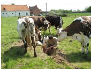 VETABIO : Wallonie-France-Flandre, Valoriser l'Expérience Transfrontalière en Agriculture biologique
