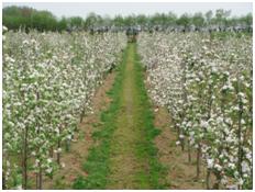 L'Agriculture biologique et le CRA-W