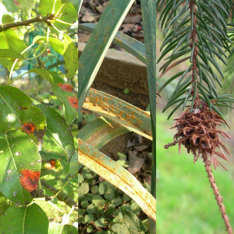 Consultations sur les maladies et les ravageurs des plantes