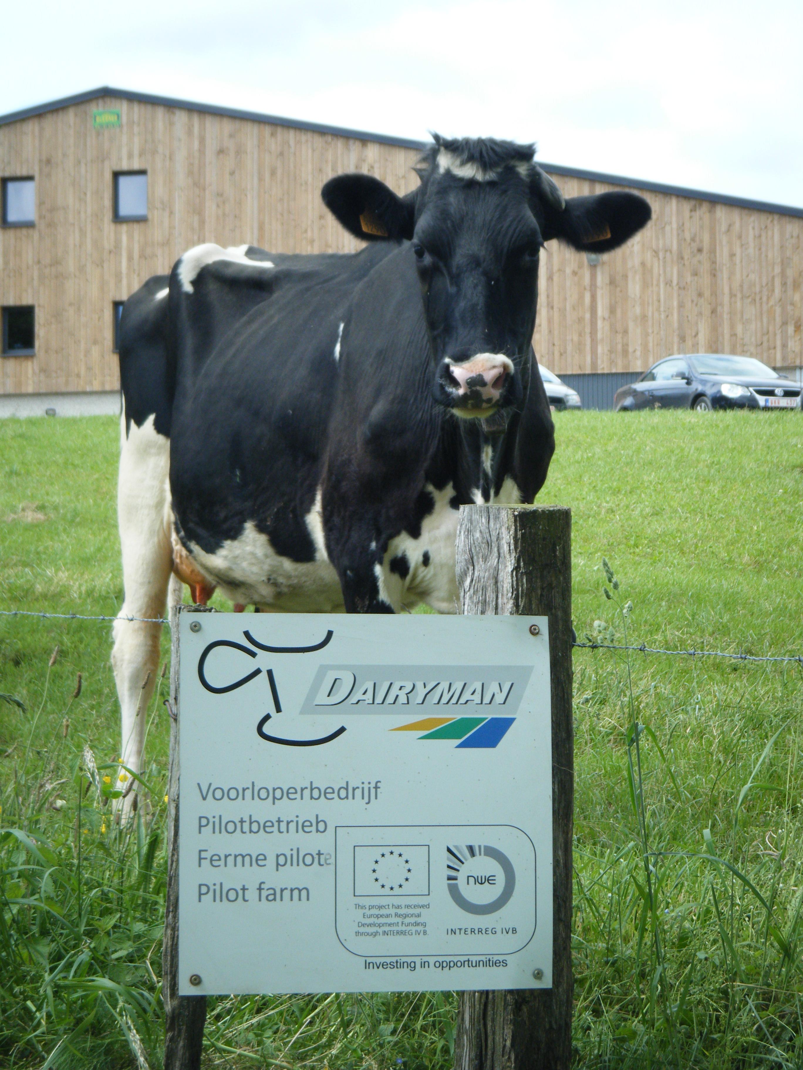 Dairyman : le coup de pouce aux exploitations laitières !
