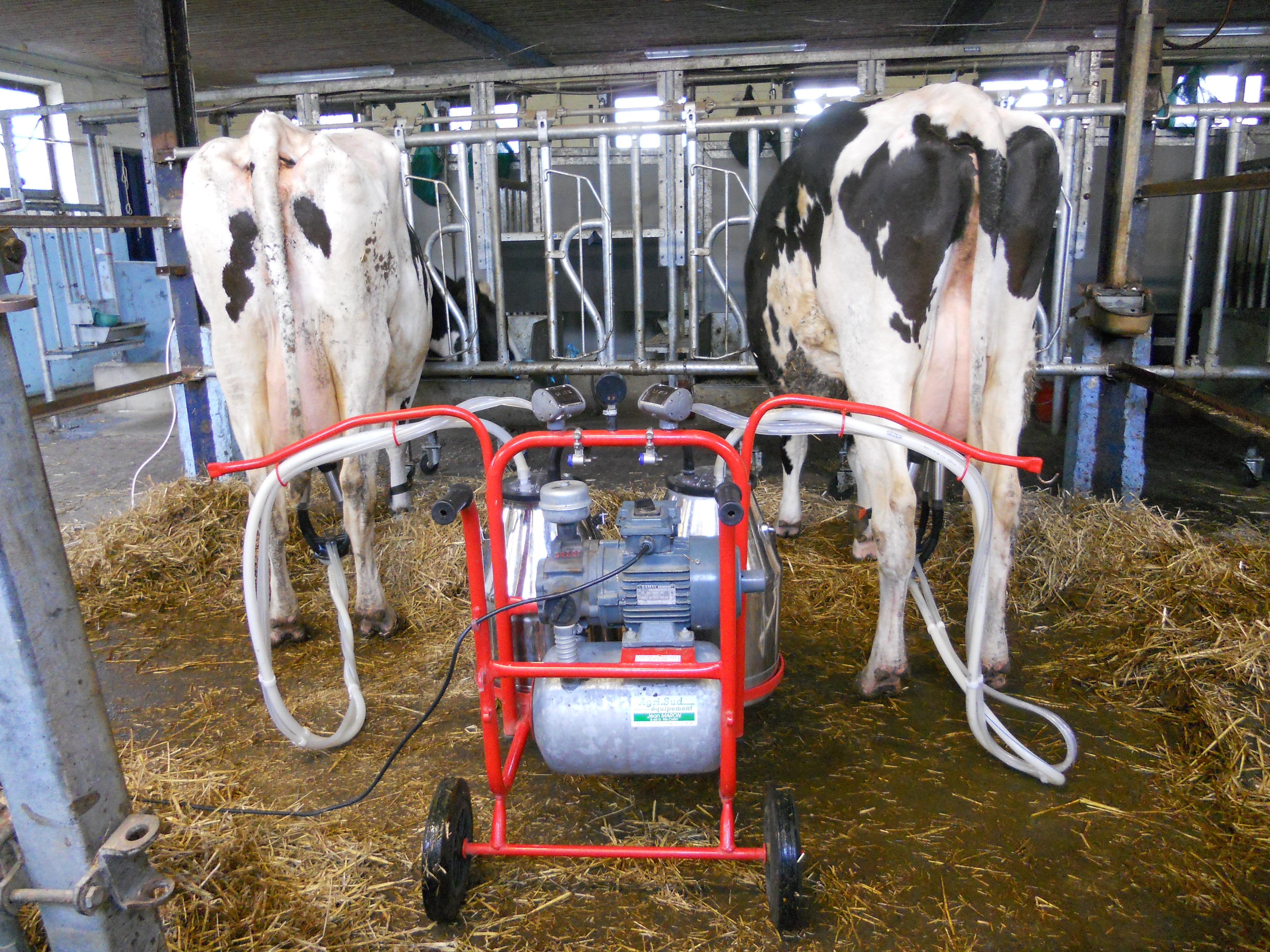 De nouvelles stratégies alimentaires pour des vaches laitières super efficientes