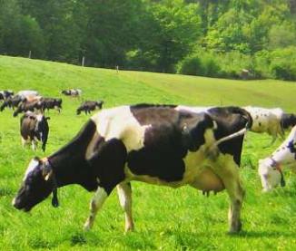 Autonomie alimentaire :   est-ce possible dans nos  exploitations laitière?