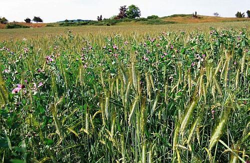 De la recherche à l'action en Agriculture biologique