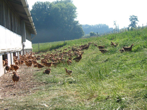 CRA-W takes a close look at the organic poultry sector