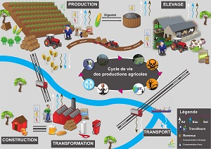 La durabilité des filières agricoles wallonnes : un défi à la portée des analyses du cycle de vie ?