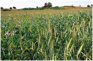 1ère JOURNEE « DE LA RECHERCHE A L'ACTION EN AGRICULTURE BIOLOGIQUE »