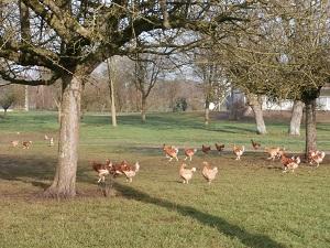 L'aménagement des parcours volailles : une plus-value pour l'exploitation