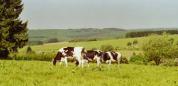 L'urée du lait, un indicateur de la conduite du troupeau laitier