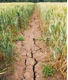 Meteorological risks as drivers of environmental innovation in agro-ecosystem management