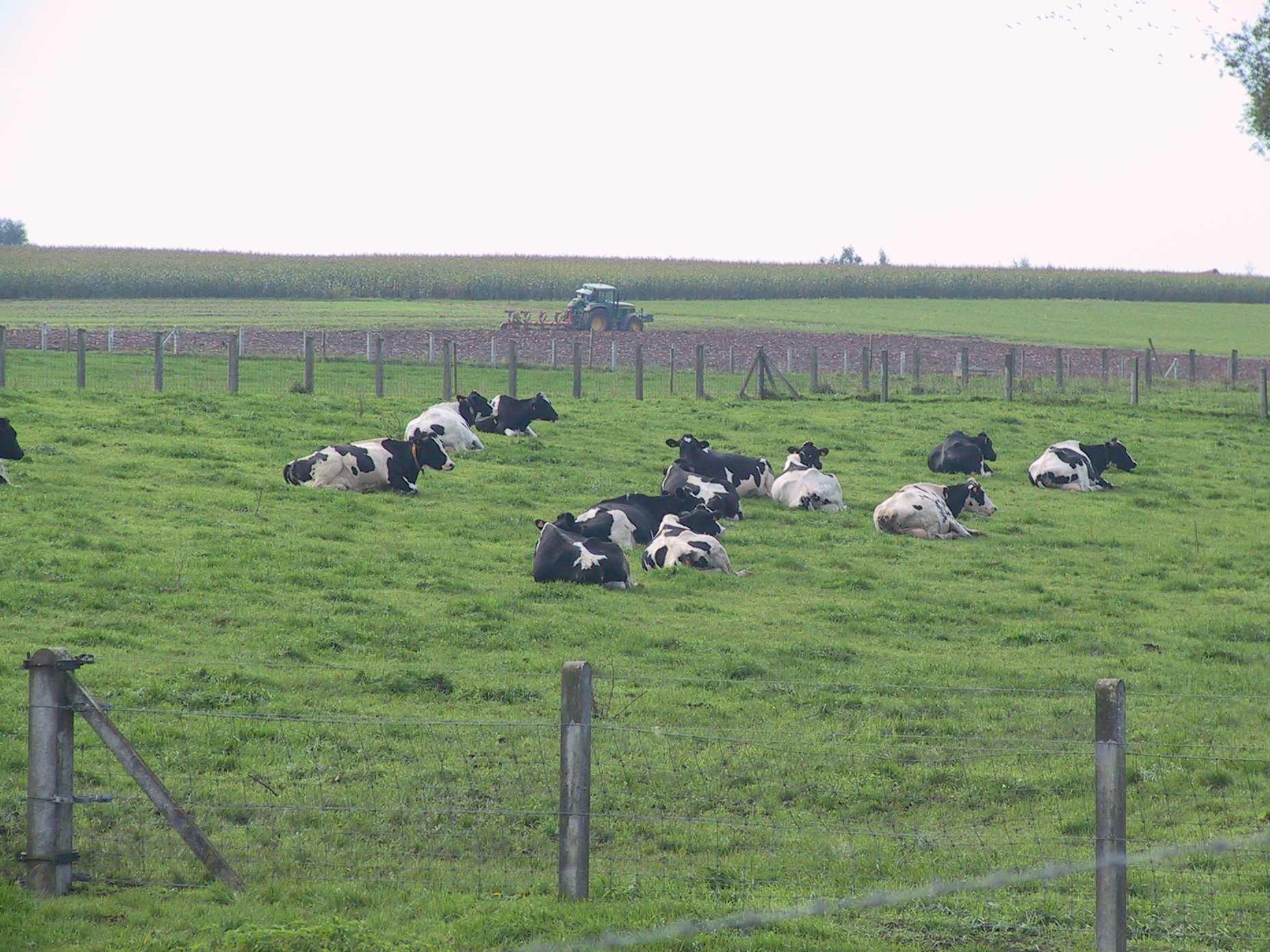 L'alimentation de la vache laitière au service du développement durable