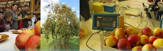 Portes-Ouvertes Sauvegarde et Valorisation des anciennes variétés fruitières
