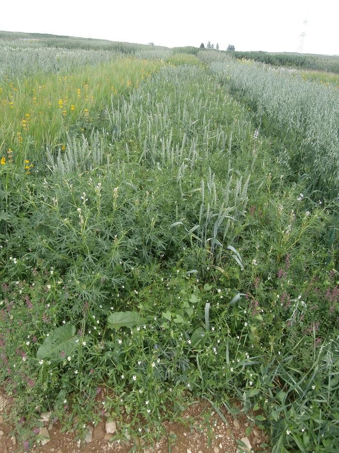 Intérêts et agronomie des associations céréales-protéagineux