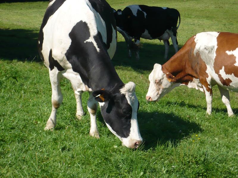 « La conduite du troupeau en Agriculture Biologique »