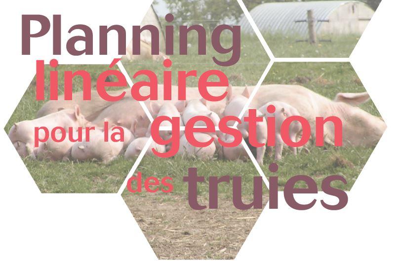 Le planning linéaire, un outil pour la gestion des truies en élevage Bio