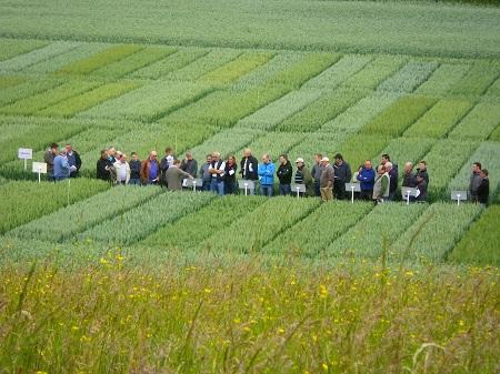 Variétés de céréales, une meilleure connaissance pour des conseils personnalisés