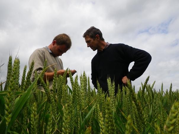 Evaluation des lignées des espèces agricoles de grande culture en vue de leur intégration sur la liste belge des variétés