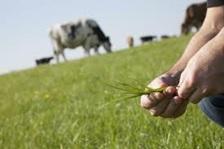 Les prairies, éléments clés de nos systèmes d'élevage
