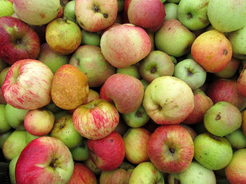 Optimiser la date de cueillette et limiter les pertes de fruits après récolte