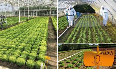 Measuring pesticide residues in food