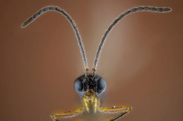 BPL - Tests ecotoxicologiques sur insectes utiles