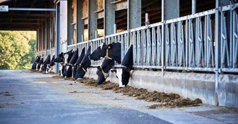 Journée d'étude élévage laitier