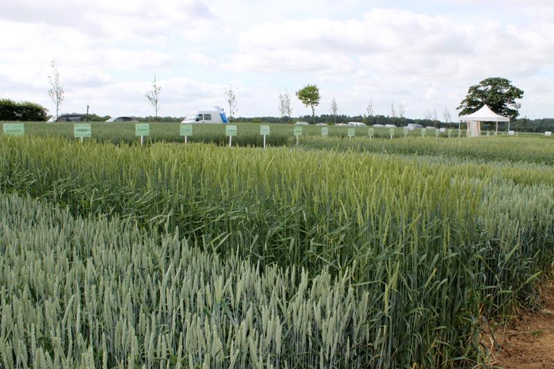 Visites d'essais - Plateforme céréales bio