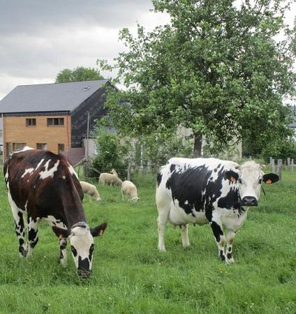 MIXENABLE : un projet européen pour l'amélioration de l'élevage biologique mixte