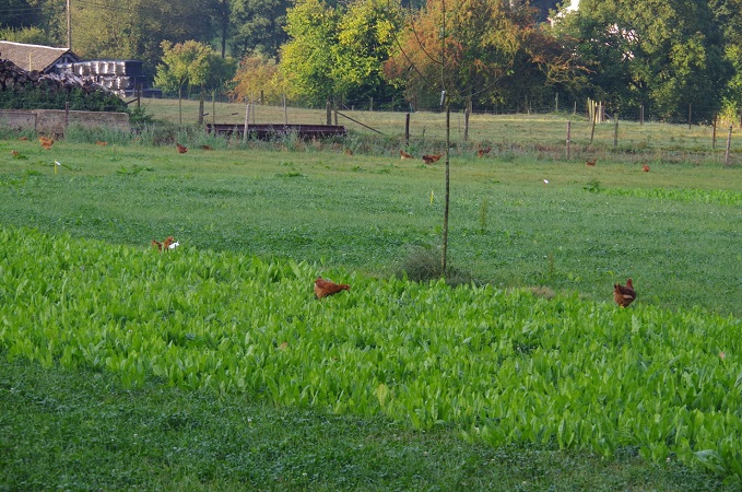 Designing free-range environments: so chickens can go green!