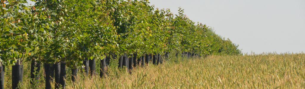 Journée de lancement du projet Transaé - TRANSition vers l'Agro-Ecologie