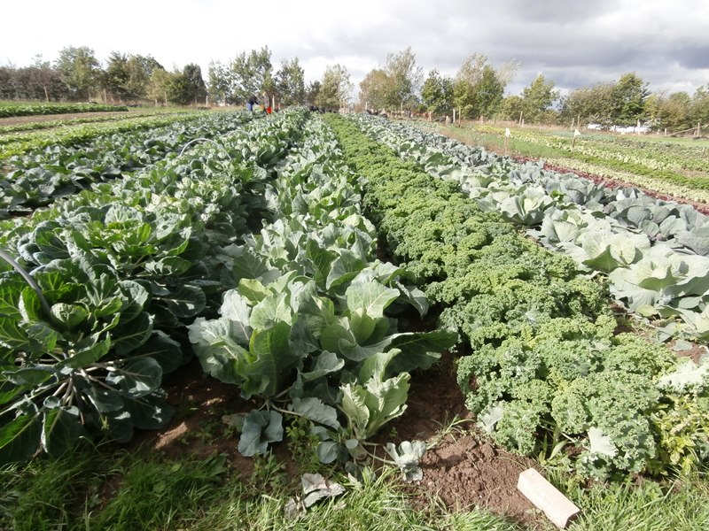 Implantation de cultures de légumes après prairie permanente