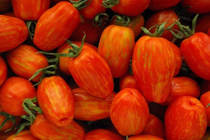 Evaluation et caractérisation de différentes variétés de tomates en maraîchage biologique
