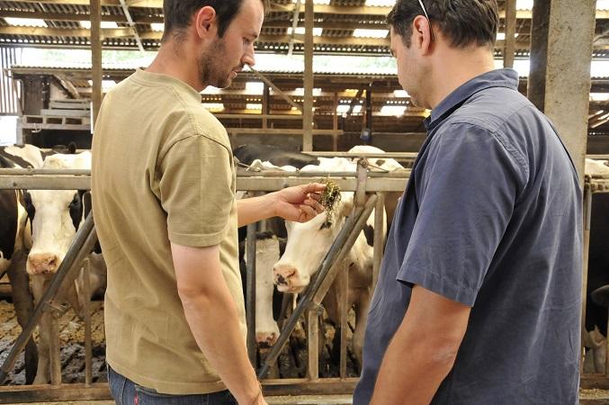 Réfléchir ensemble sur l'optimisation de son élevage laitier