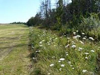 Des bandes fleuries aménagées comme stratégie pour améliorer la biodiversité et les services écosystémiques