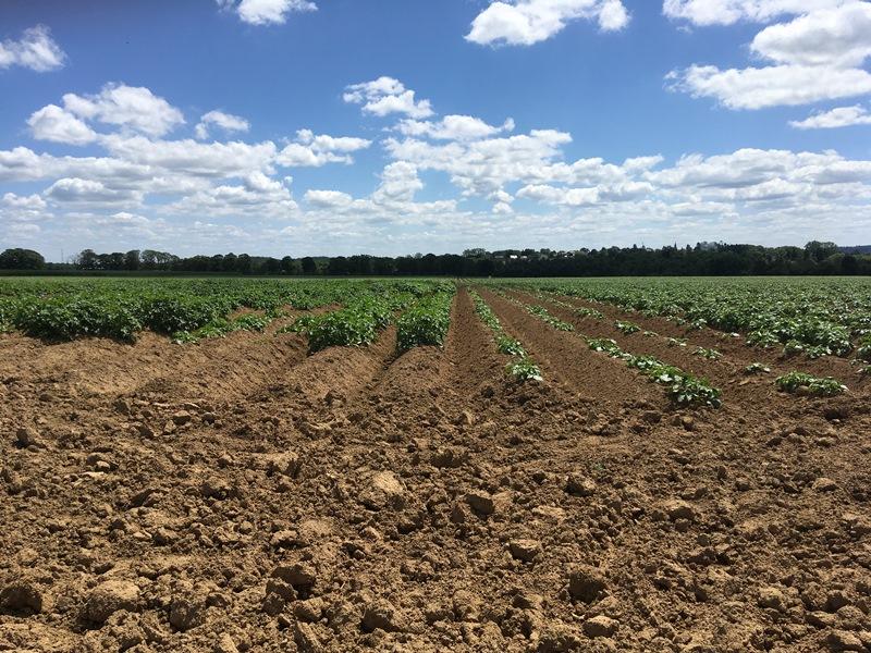 Visite d'essai en pommes de terre robustes bio