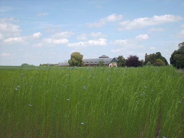 Le CRA-W au cœur d'un projet européen pour protéger le lin textile par la lutte biologique