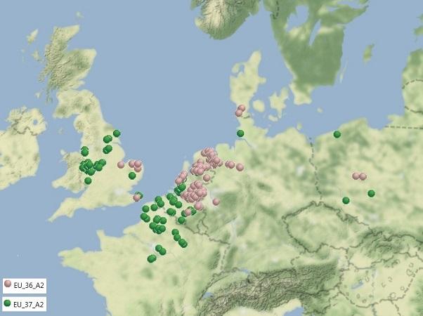 Le mildiou de la pomme de terre : monitoring de la résistance aux fongicides