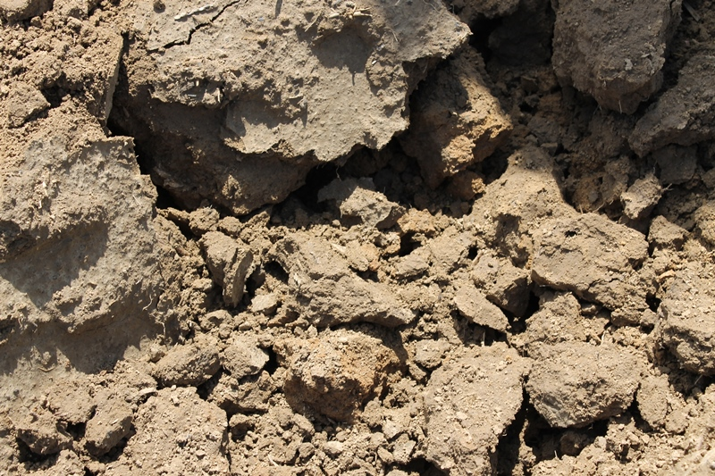 Dossier : Statut organique et minéral des sols en agriculture biologique