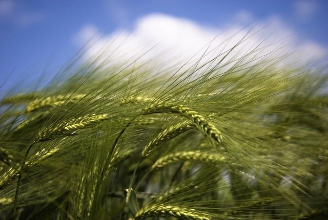 Livre blanc Céréales