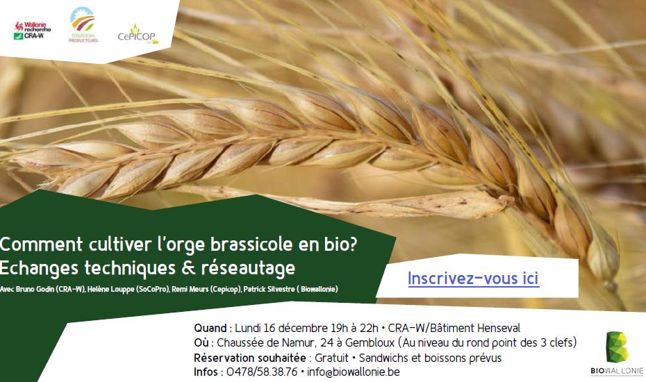 Comment cultiver l'orge brassicole en bio ?